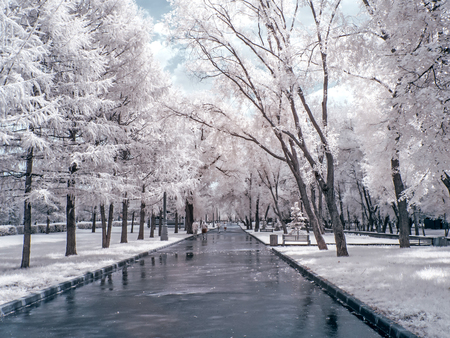 Infrared photography. Alley in the park Stock Photo