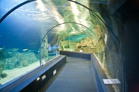 SOCHI, ADLER, RUSSIA - September 15.2011: Interior of the city halls of the Sochi Discovery World Aquarium. Tunnel