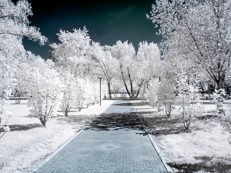 Infrared photography. Park in the city of Reutov. Moscow Oblast