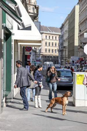 VIENNA, AUSTRIA - May 05.2011: Scene on the street. The dog does not obey the owner Editorial