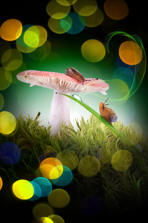 Forest mushroom russula, slug and snail, collage with bokeh background Stok Fotoğraf - 121085577