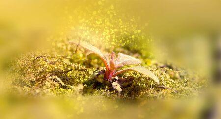Young shoot of plant on a background last year's moss. Bokeh, blur Фото со стока - 130999644