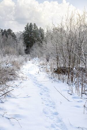 Winter landscape. Path in a forest glade