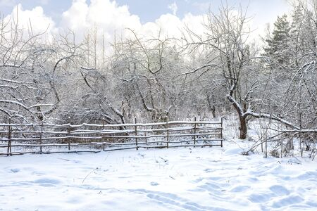 Winter landscape. Fence in the apple orchard in winter