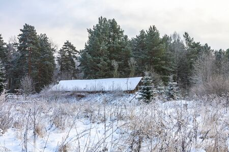 Winter landscape. Village shed on a snowy forest edge