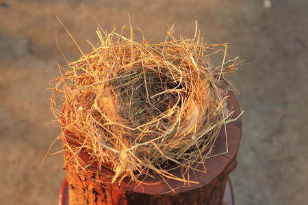 Top view closeup empty bird nest with light of sunset