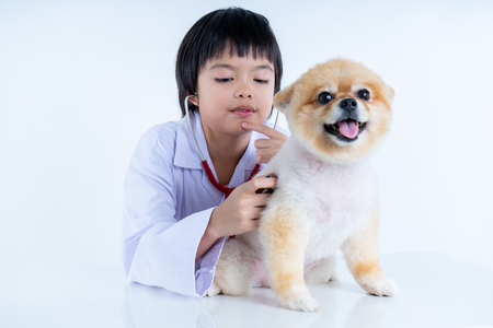 Isolated portrait of young female veterinarian checking up Pomeranian dog in veterinary clinic. Studio shot of girl and puppy on white background Archivio Fotografico - 123720542