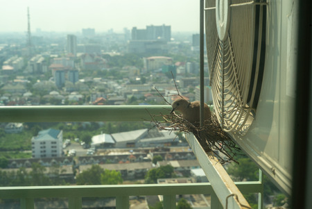 Closeup bird in a nest on the steel cage of air conditioner at the terrace of high condominium with blurred cityscape background in sunshine morning Archivio Fotografico - 126645630
