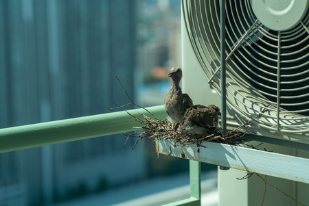 Closeup birds in a nest on the steel cage of air conditioner at the terrace of high condominium with blurred cityscape background in sunshine morning Archivio Fotografico - 126712795