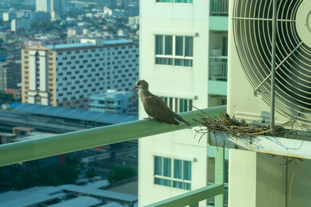 Closeup birds in a nest on the steel cage of air conditioner at the terrace of high condominium with blurred cityscape background in sunshine morning Archivio Fotografico - 126712791