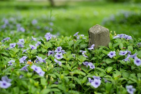 Selective focus on old concrete post with little blossom purple flowers and green bush in foreground and background Archivio Fotografico - 126712799