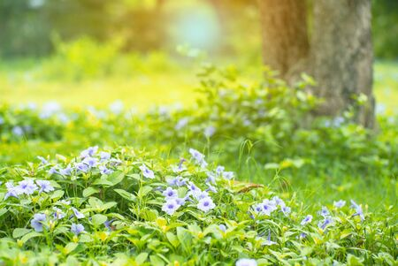 Landscape field of little purple blossom flowers and green bush in outdoor ground with blurred old tree in background Archivio Fotografico - 126645780