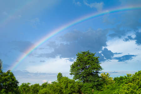 Abstract background of rainbow after raining with landscape of trees and blue sky background
