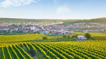 Amazing view over beautiful village Velke Pavlovice, Moravia, Czechia taken during sunrise on a summer morning. The small city surrounded by vineyards is partly hidden in the morning fog.