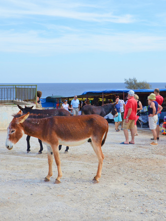 Dipkarpaz, Turkish Northern Cyprus - Oct 3rd 2018: Wild donkeys standing by the traditional outdoor market. Several tourists are passing by. The animals are local tourist attraction.
