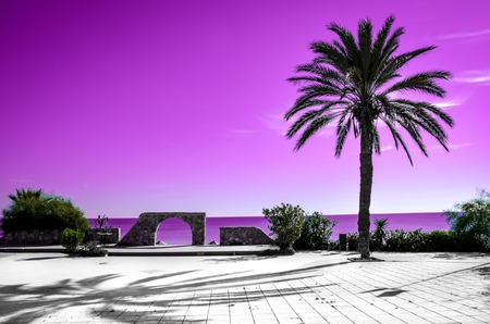 Palm tree silhouette with pink sky and sea in the background. Different kind of wallpaper with gradient colors evoking summer vibes and vacation feelings.