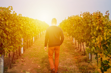 Silhouette of a young, well dressed man, walking in the rows of vineyards in the sunlight. Sunset light. Abstract concept, metaphorical picture. Banco de Imagens