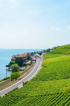 Vertical photography of green vineyards on slope by beautiful Lake Geneva, Switzerland. Village Rivaz in background. Famous Lavaux wine region. Switzerland summer. Beautiful landscapes. Wine making.