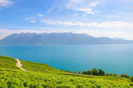 Amazing Lake Geneva surrounded by green vineyards on adjacent slopes. Photographed in famous Lavaux wine region, from village Riex. Switzerland wine making. Tourist attractions.