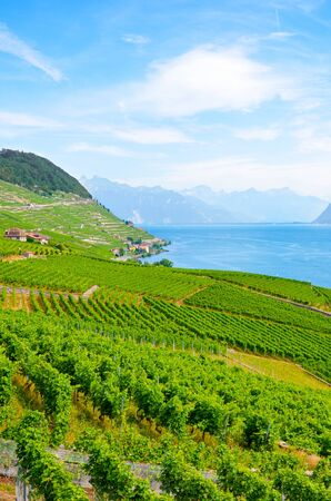 Vertical photography of beautiful terraced vineyards on slopes of Lake Geneva. Switzerland photographed in late summer. View from village Riex. Lavaux wine region, UNESCO Heritage. Switzerland summer. Stockfoto