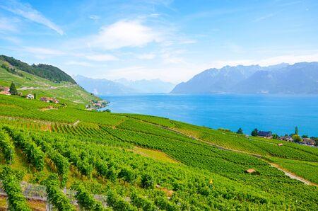 Beautiful terraced vineyards on slopes of Lake Geneva. Switzerland photographed in late summer. View from village Riex. Lavaux wine region, UNESCO Heritage. Switzerland summer. Stockfoto