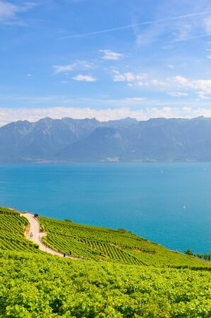 Vertical picture of Geneva Lake and beautiful vineyards on the adjacent slopes. Photographed in Lavaux wine region, Riex village in summer season. Blue lake, green vineyard. Tourist places.