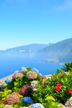 Colorful Hydrangea flowers and the beautiful northern coast of Madeira Island, Portugal. Typical Hortensia flower. Amazing coast by Ribeira da Janela. Atlantic ocean landscape. Haze in background.