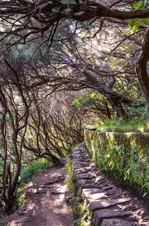 Hiking path in Laurel forest, part of Levada 25 Fontes in Madeira island, Portugal. Irrigation system canal, narrow stone way, and laurel trees. Laurissilva, laurisilva. Portuguese tourist attraction. 版權商用圖片