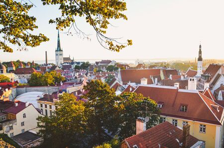 Amazing skyline of Tallinn, Estonia with dominant St. Olaf's Church and Church of the Holy Spirit. View of the Estonian capital. Historical city center in sunset. Sun rays over roofs. Tree branches.