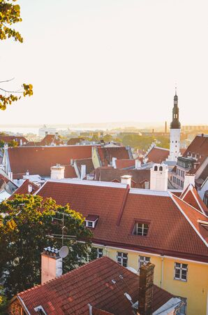 City skyline of the Estonian capital Tallinn with dominant St. Olaf's Church and Church of the Holy Spirit. Historical old town in the sunset light. Sun rays over roofs. Tree branches.