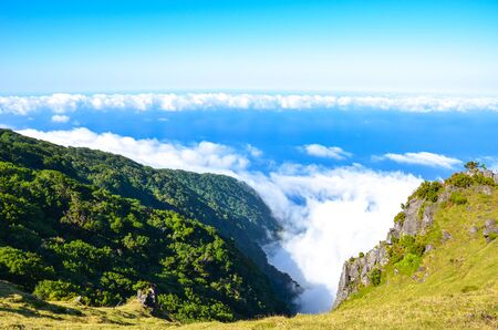 Above the clouds in Fanal, Madeira Island, Portugal. Old laurel trees, laurissilva, on a hill. Laurel forest above the Atlantic ocean on a steep rock. Blue waters of the Atlantic ocean. Sunny day.