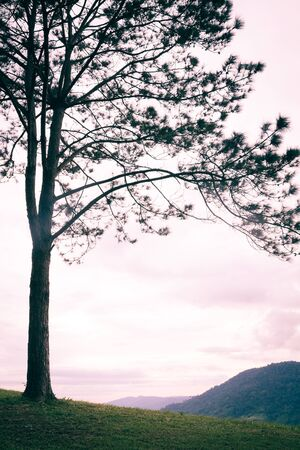 lonely tree isolated on the mountain,vintage Reklamní fotografie