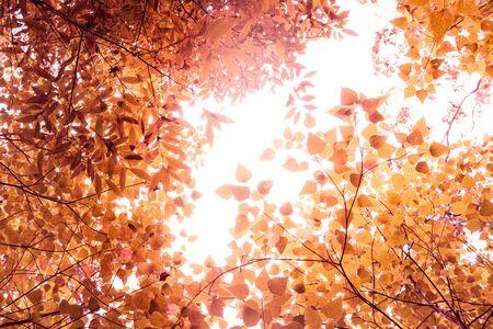 Green leaves with bright sunshine background,vintage Reklamní fotografie