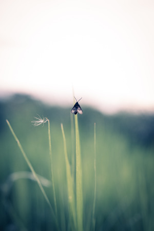 An insect clings to a blade of grass,vintage
