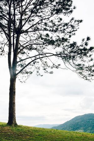 gain: lonely tree isolated on the mountain,vintage gain