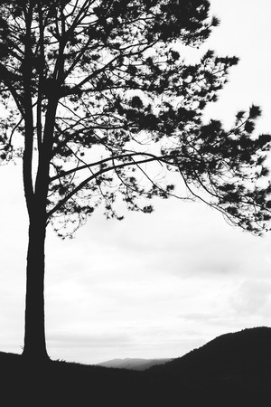 gain: Lonely tree isolated on the mountain,vintage gain ,blackandwhite