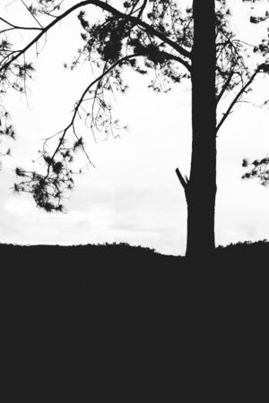 Lonely tree isolated on the mountain,vintage gain ,blackandwhite