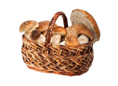 a mushrooms in a basket