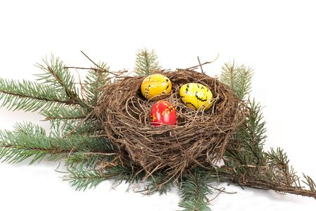 nest with eggs on a branch photo