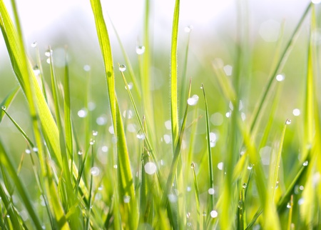a drop on the grass Stock Photo