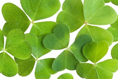 a clover texture on white Stock Photo - 12936726