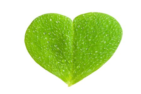 a clover in heart form Stock Photo - 11689995