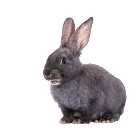 bunny ears: a rabbit,isolated on white