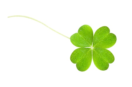 a clover isolated on white Stock Photo - 12936793