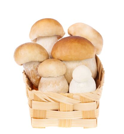 a mushrooms in a basket photo