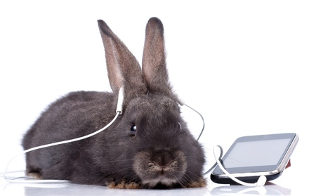 a rabbit and headphone, isolated on white Stock Photo