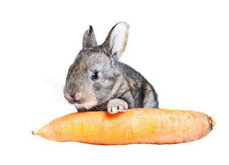 carot: a rabbit and carot Stock Photo