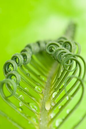 a macro of cycas with drops Stock Photo - 12936955