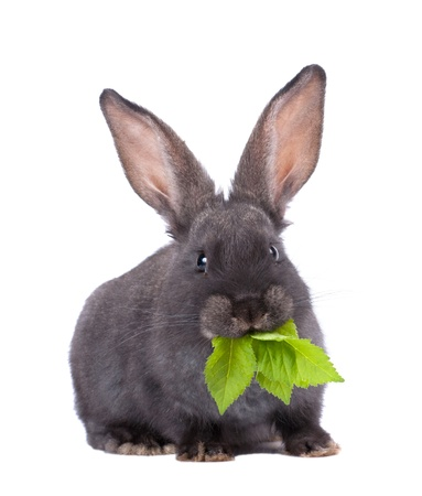 a rabbit,isolated on white