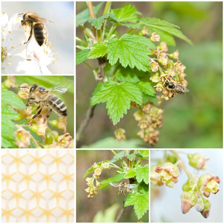 pollination: a pollination, collage from 6 photo Stock Photo